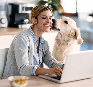 Femme télétravaillant avec son chien