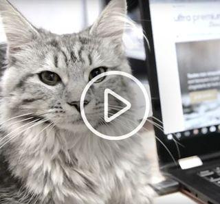 Chat allongé sur un bureau, près d'un ordinateur