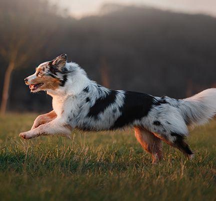 Un chien courant en pleine nature