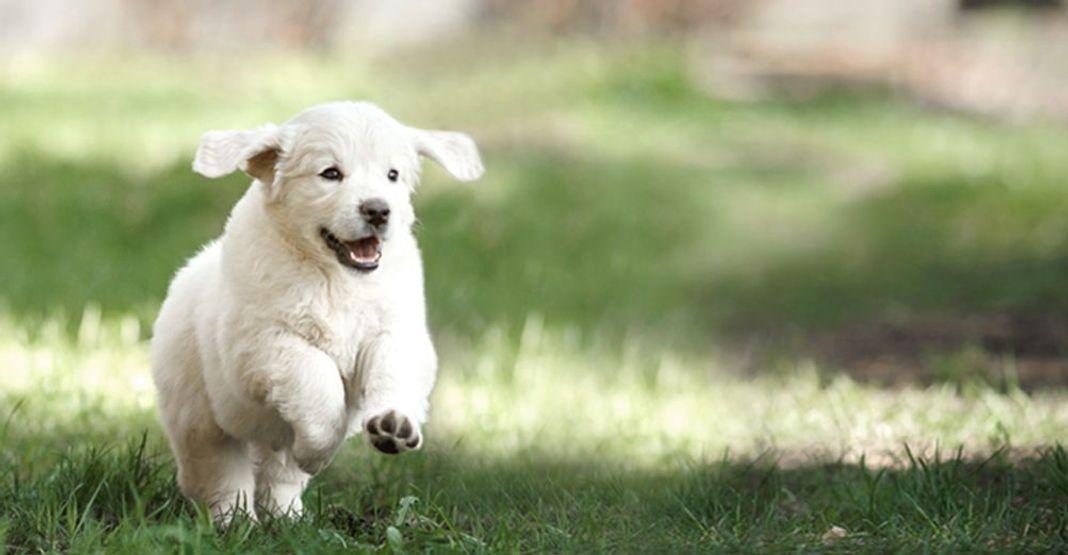 Un chiot blanc jouant en pleine nature