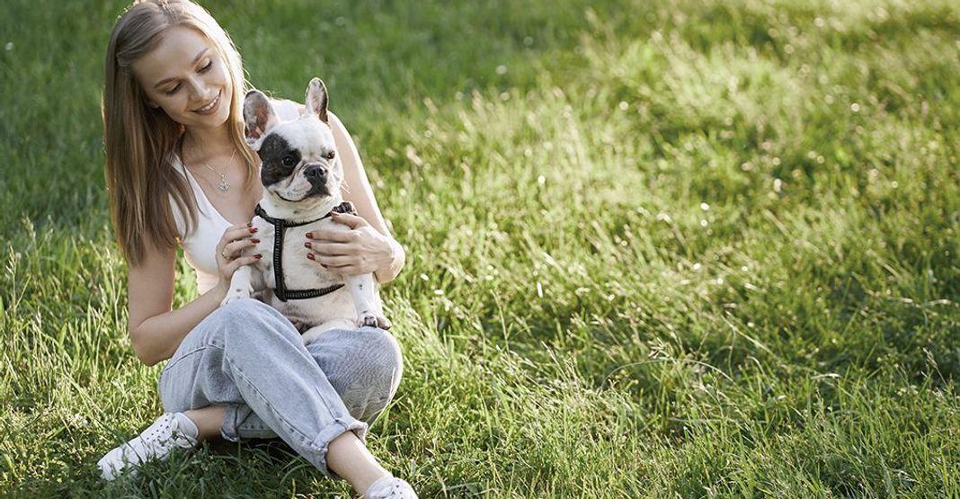 Un chien sur les genoux de sa maîtresse en plein air