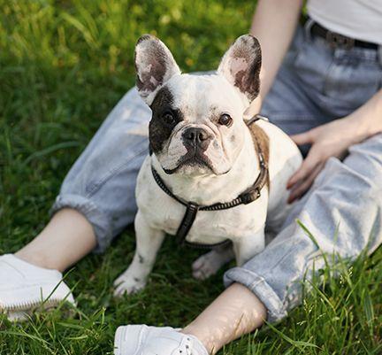 Un chien assis près de sa maîtresse en plein air
