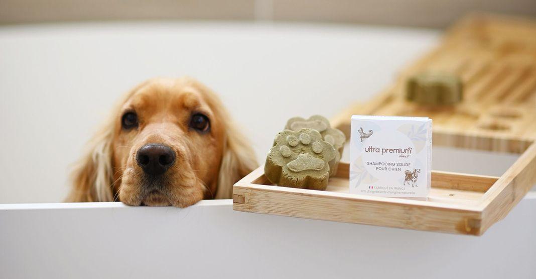 Chien dans une baignoire près du shampooing solide pour chien Ultra Premium Direct
