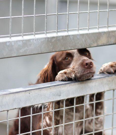 2 chiens dans un refuge